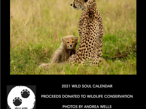 2021 wall calendar - cheetah with cub